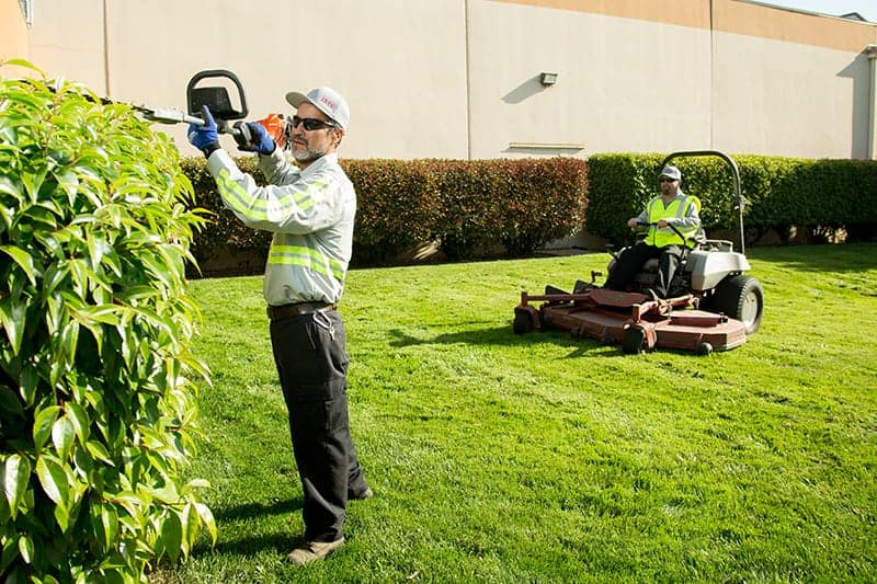 Lawn Cleaning Tips